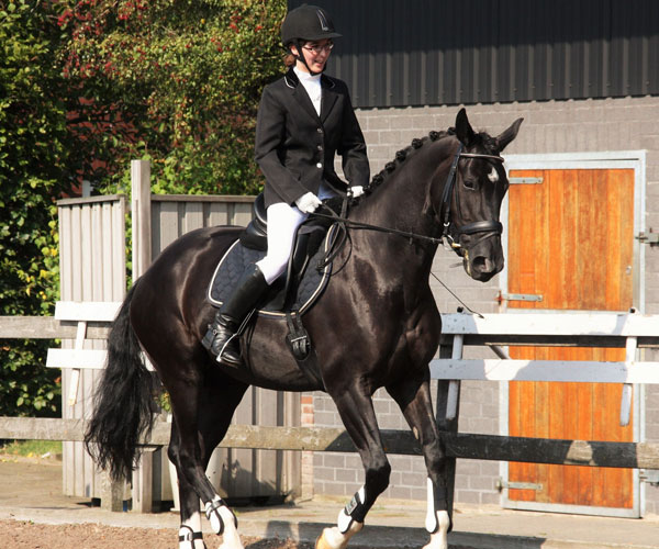 Dressage & Showjumping